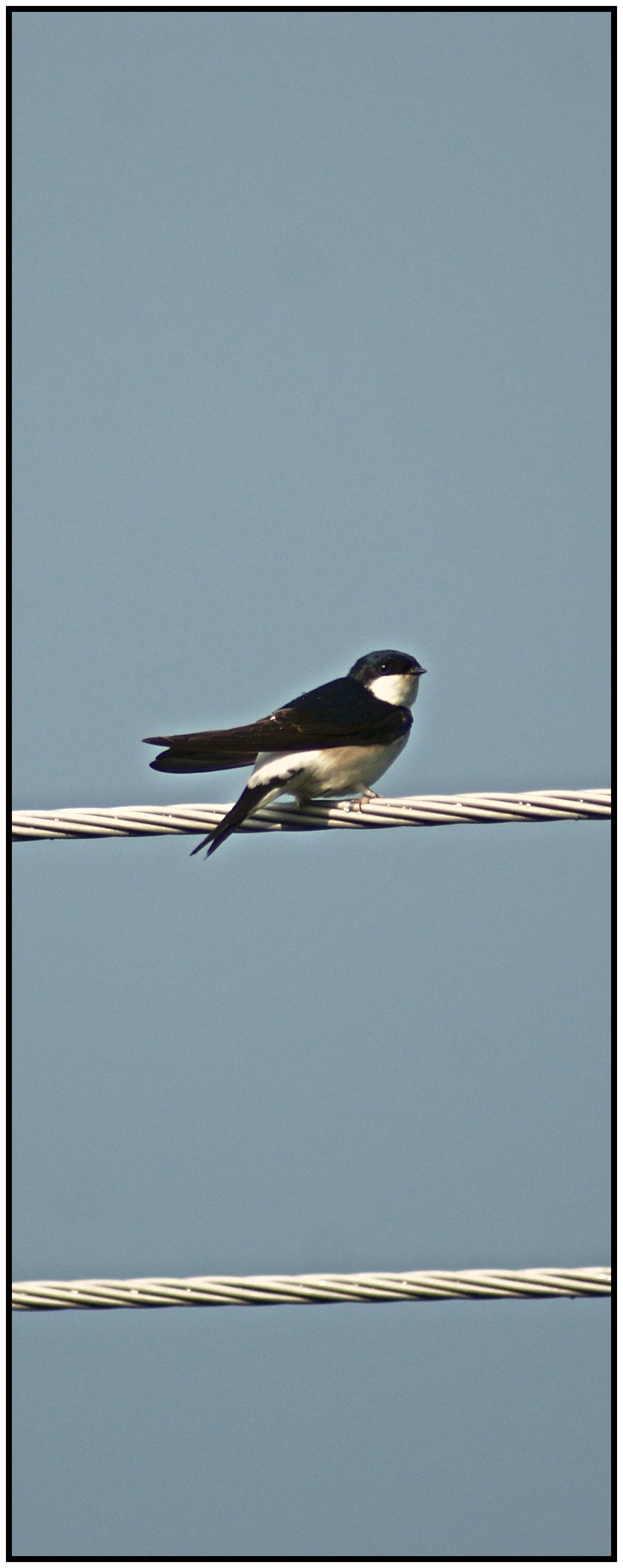 Pták na drátě