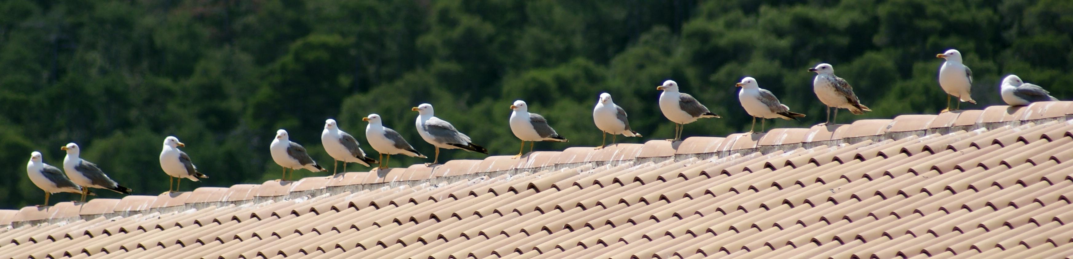 Rackové na střeše