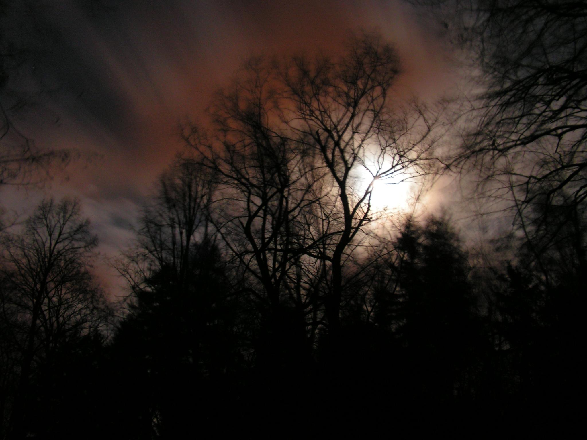 Měsíc ve větvích