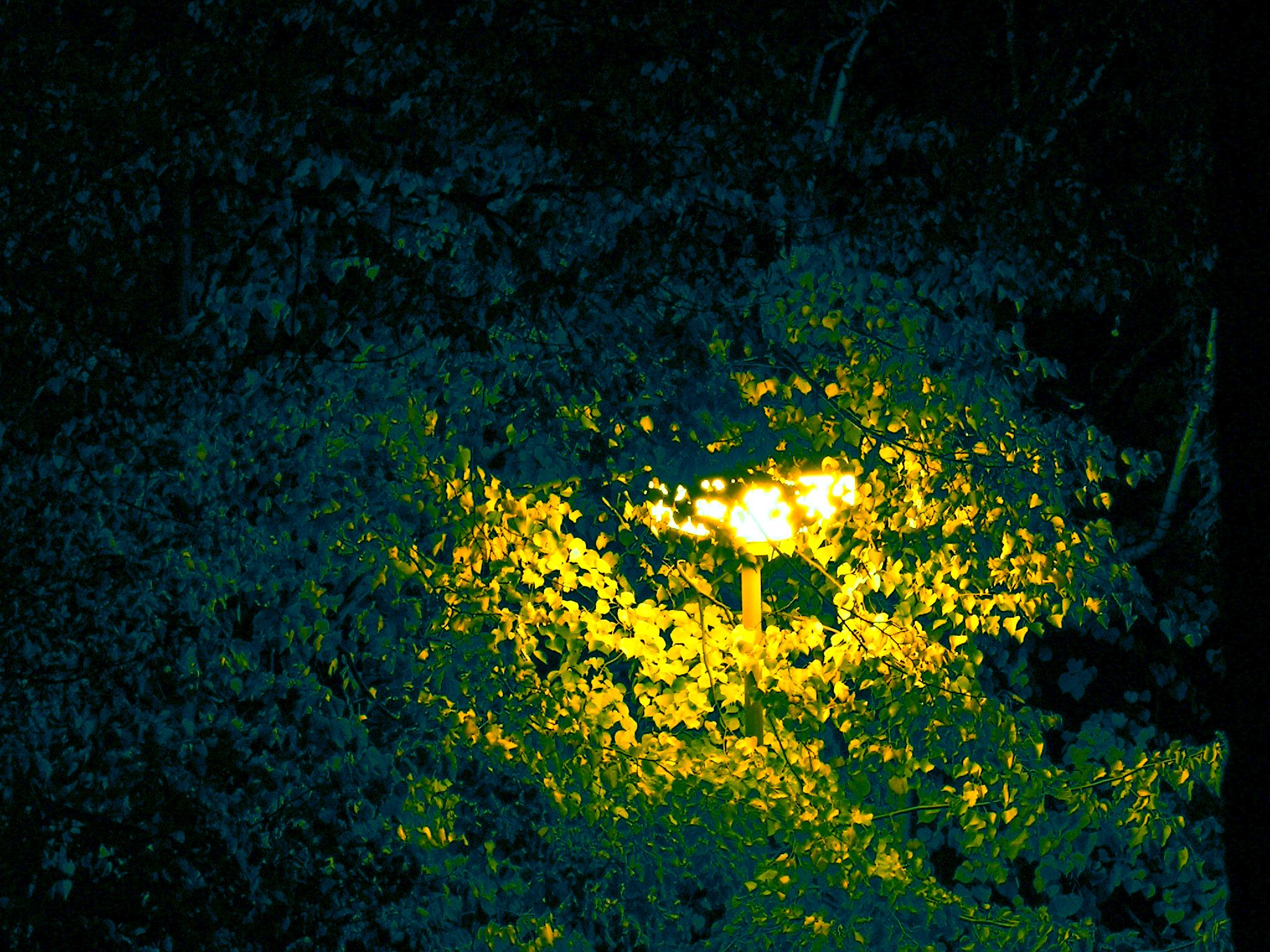 Lampa ve větvích břízy