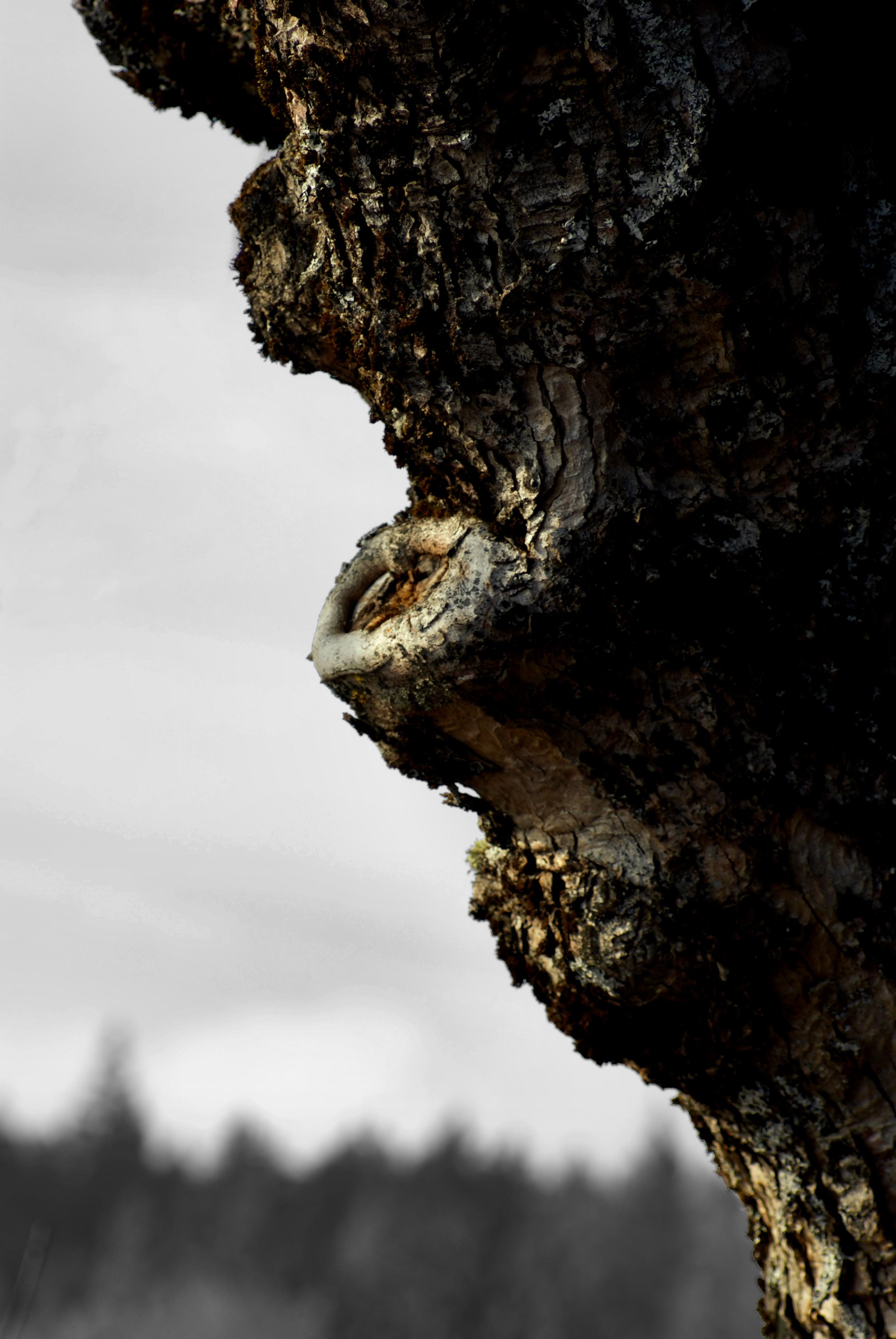 Věk stromu 2