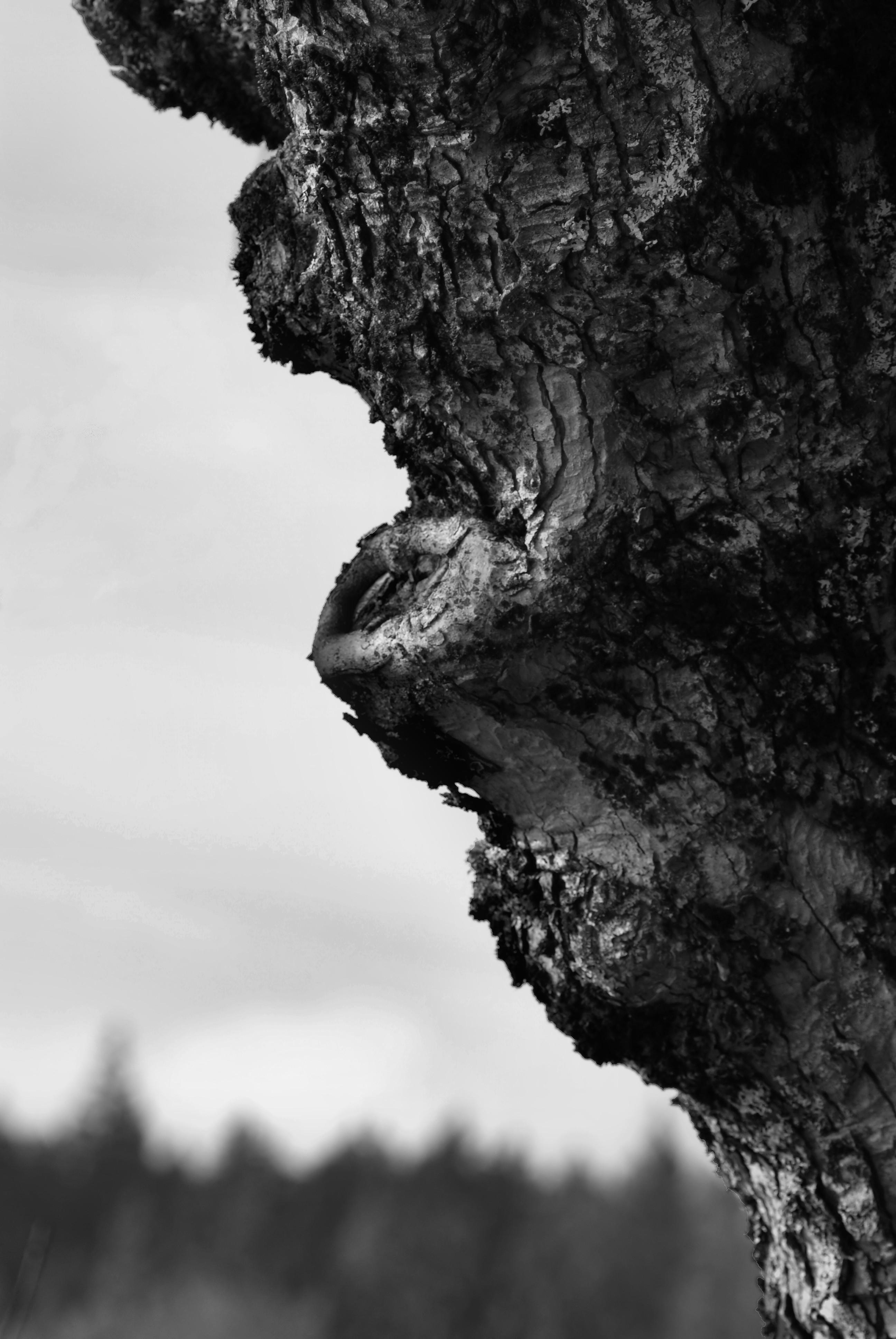 Věk stromu 1